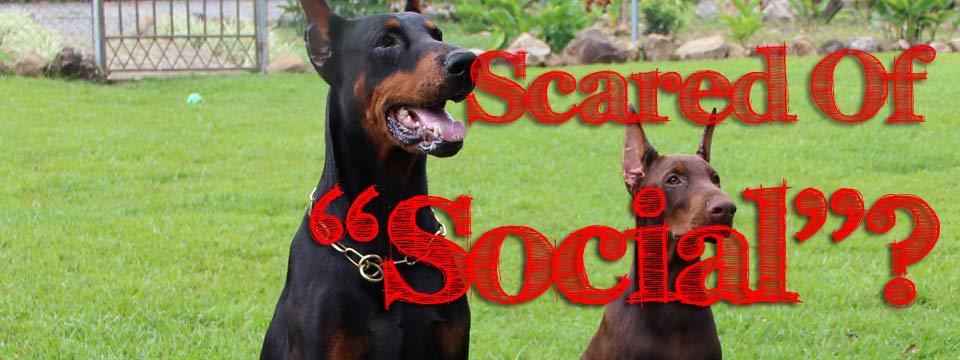 socialScary